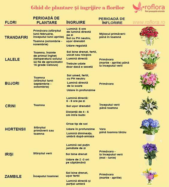 Ghid de plantare si ingrijire a florilor