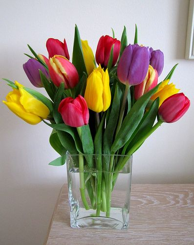 Tulips | Flickr - Photo Sharing!
