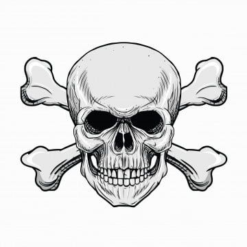 Head Skull With Crossbones In The White Background Skull Clipart Anatomy Angry Png And Vector With Transparent Background For Free Download Ilustrasi Tengkorak Gambar Serigala Seni Vektor