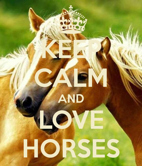 Image result for staying calm with horses