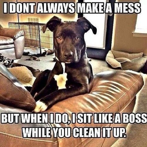 I DONT ALWAYS MAKE A MESS  BUT WHEN I DO I SIT LIKE A BOSS WHILE YOU CLEAN IT UP.  -photo credit to the owner #dogs #cats