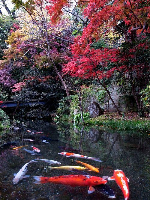 Pinterest the world s catalog of ideas for Beautiful koi ponds
