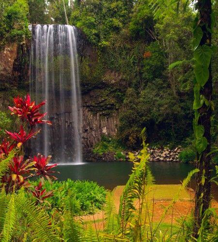 Best picture daintree rainforest australia s 6 most for Australian rainforest