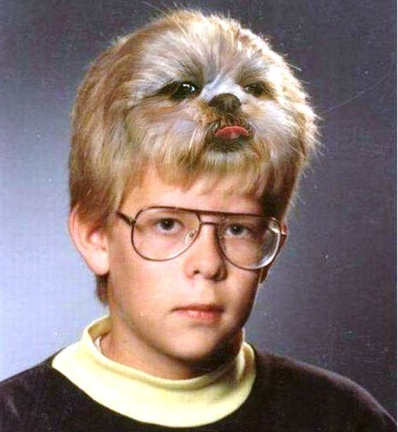 Very Funny Dog Hairstyle Picture Funnyho Com Funny