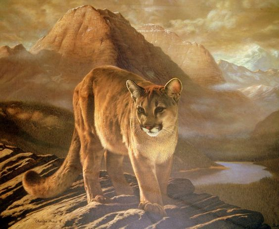 """""""Cougar"""" By Charles Frace"""