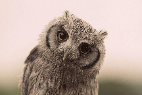 Owl be back...