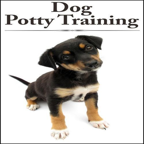 House Training A Boxer Puppy Training For Boxers Dog Potty