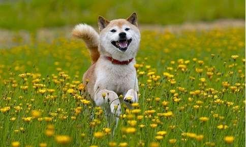 Hemlock Animal Hospital Veterinarian In Vancouver Bc Popular Dog Shiba Inu City Pets