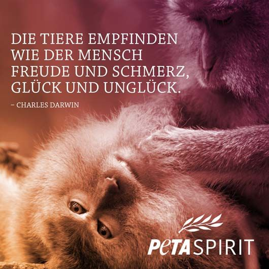 PETA Spirit Zitat von Charles Darwin