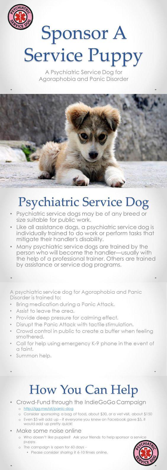 https://www.gofundme.com/y6afm6b8  http://chicadita.com/marlowe-the-service-dog/ Psychiatric Service Dog Information on psychiatric service dogs and their tasks.
