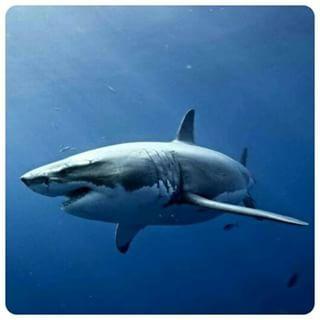 fotos de lobos marinhos em cativeiro - Pesquisa Google