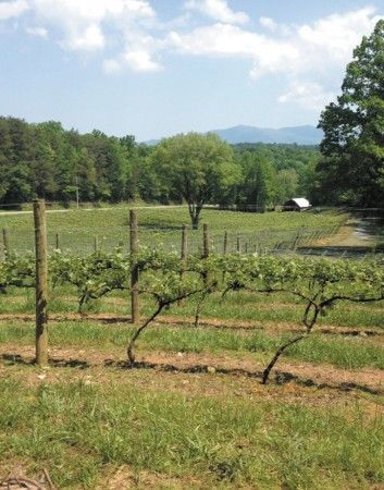 The vineyards and the view at Cartecay in Ellijay.