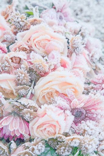 Winter flowers  -  Frozen in Time by Winter.  I miss true winter.: