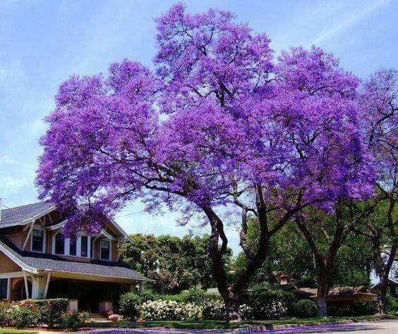 Albero Per Casa Alberi Da Giardino Giardini Perenni Piante Da