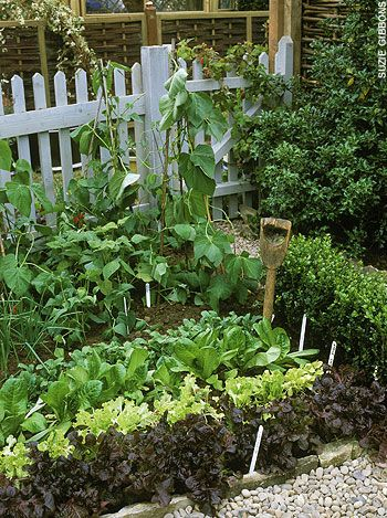 a little kitchen garden:
