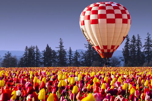 tulips and hot air balloons. Just spotted this pic here in Pinstest. Almost 99.9% sure it is home. Otherwise known as SKagit Valley, WA.
