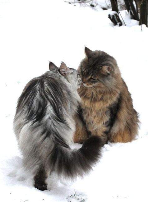雪の日のカップル猫