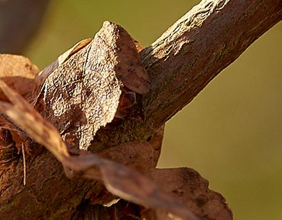 "Check out new work on my @Behance portfolio: ""Small brown leaf"" http://be.net/gallery/47007269/Small-brown-leaf"