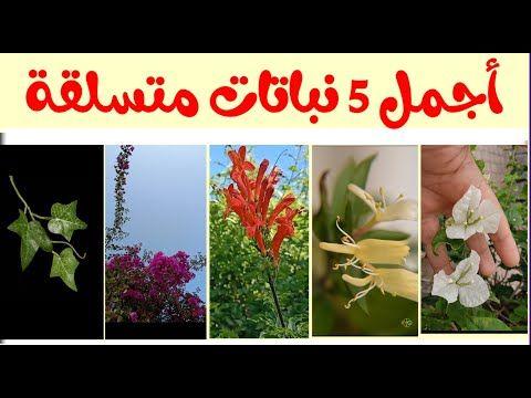 Pin By فهد العنزي On حدائق In 2021 Plants