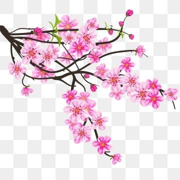 Watercolor Sakura Fre Background With Blossom Cherry Branches Png And Vector In 2020 Cherry Blossom Art Cherry Blossom Background Cherry Blossom