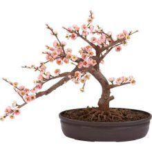"Bonsai pink cherry tree.  Silk.  15"" tall x 17½"" wide x 10"" deep."