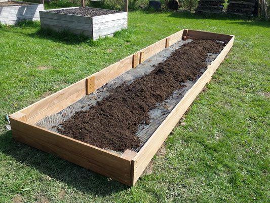 Gruner Spargel Im Hochbeet Anbauen Spargelbeet Anlegen Spargel Pflanzen Hochbeet Kuchengarten