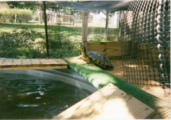 Homemade turtle pond pet diy pinterest homemade turtles homemade and turtles Diy indoor turtle pond