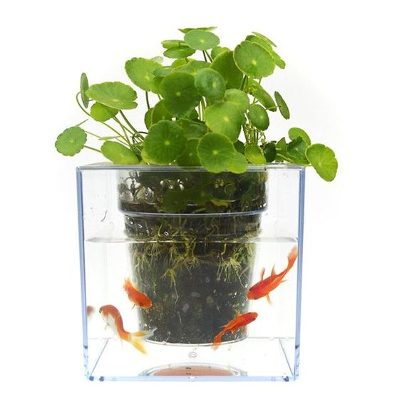 Fish tank flowerpot planters be thankful and flower for Fish tank planter