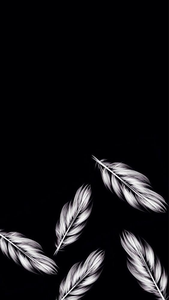 black feathers wallpaper wwwimgkidcom the image kid