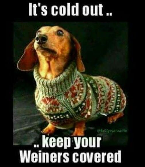 Untitled Funny Animal Pictures Dachshund Love Funny Dachshund