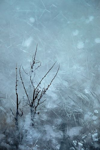 frozen by photomandala, via Flickr