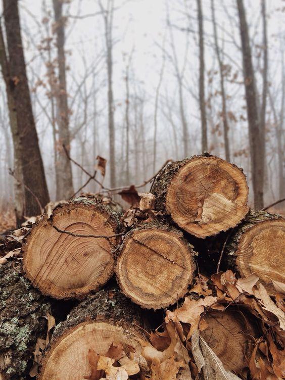 The woods + autumn + deep conversations around the fire