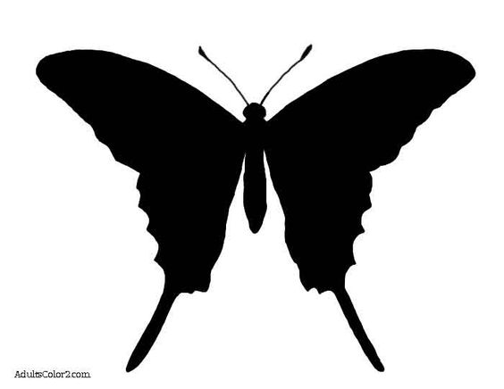 Butterfly Outline Or Silhouette: Basic Butterfly Shapes
