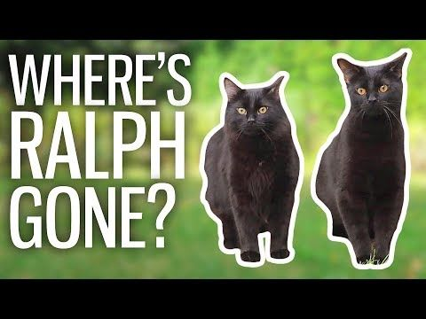 British Vlogger Half Asleep Chris A Dedicated Human To Two Very Handsome Black Cats Named Ralph And Tom Found T Kittens Cute Cats And Kittens Cute Kitten Gif