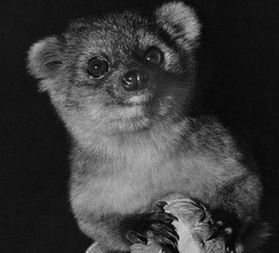 L'animal le plus mignon du monde découvert en Colombie