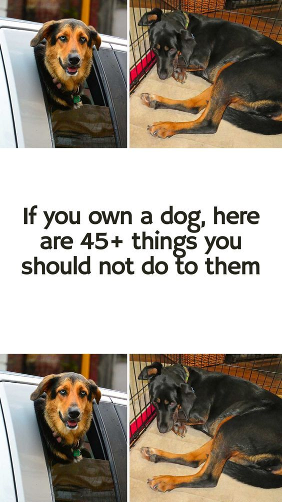 If You Own A Dog Here Are 46 Things You Should Never To Do Them Ever In 2020 Dogs Animals And Pets Pets