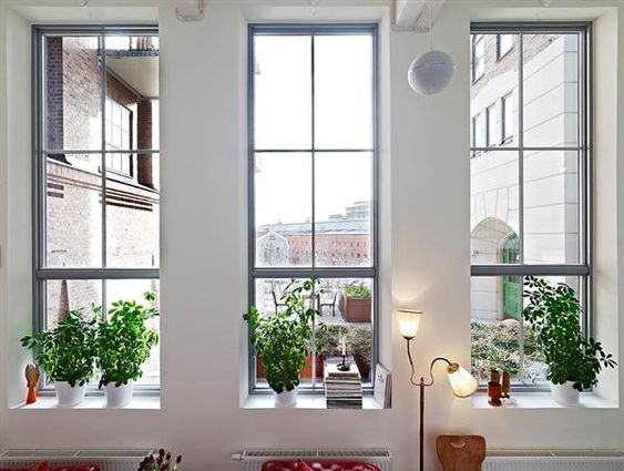 ex factory house design big and tall windows style with plants in the