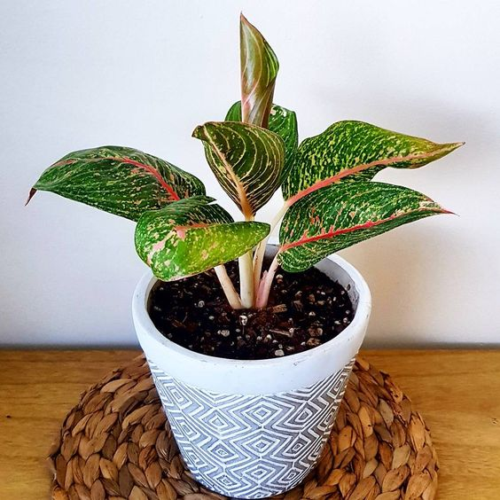 The Best Houseplants That Basically Anyone Can Keep Alive