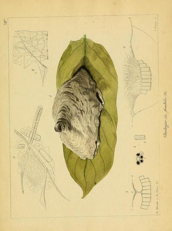 3.Bd. (1856) - Abhandlungen aus dem Gebiete der Naturwissenschaften / - Biodiversity Heritage Library