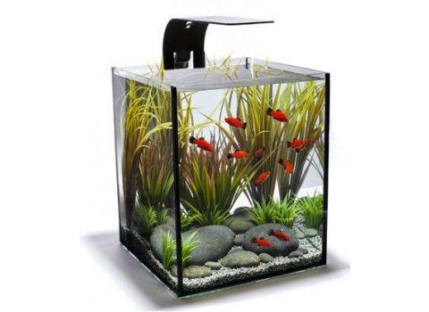 ecopico desktop aquarium to bring life and water office desk aquarium