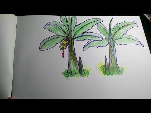 cara menggambar pohon pisang youtube drawings painting art cara menggambar pohon pisang youtube