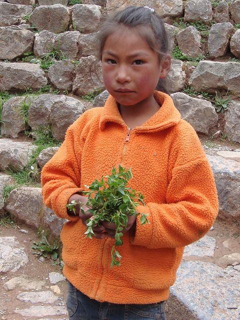 Pérou....un peu de timidité