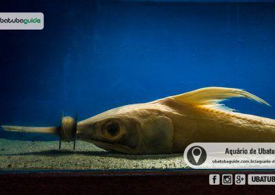 Peixe Morto No Espaco Lixo No Mar Ubatuba Horario De