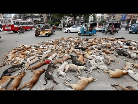 Dogs are against Islam in Pakistan