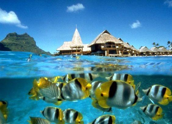 Image result for taman laut takabonerate