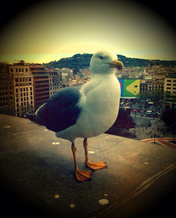 Seagull next to me!!