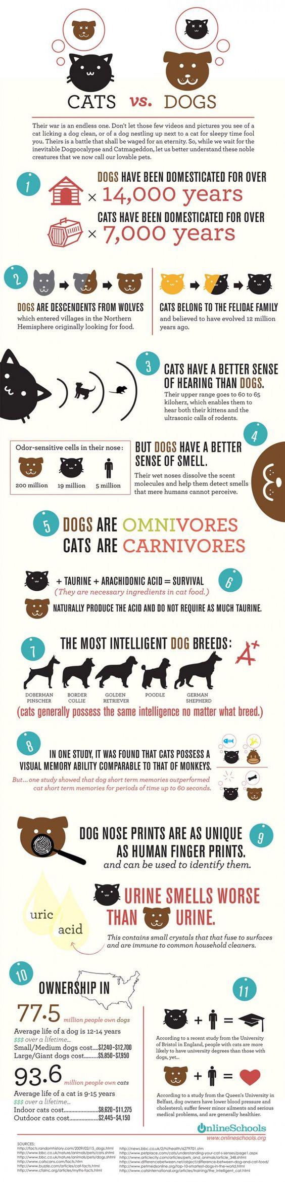 Una interessante infografica mette a confronto cani e gatti presentando le principali differenze evolutive, biologiche e intellettive tra le due specie più amate dall'uomo, con un riferimento alla loro diffusione tra la popolazione statunitense.