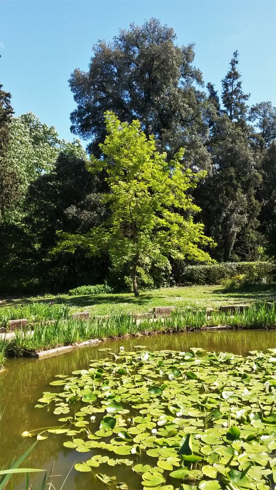 Orto botanico di Montpellier