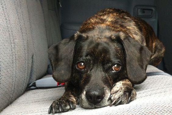 My sweet Puggle:)