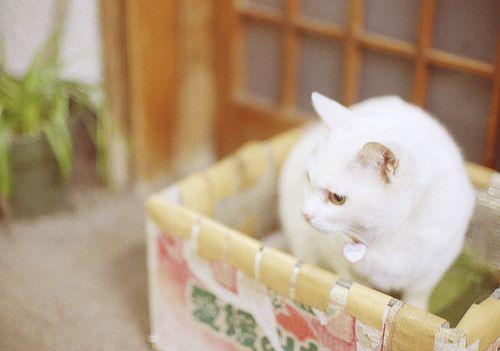 箱入り猫 by sabamiso on Flickr.